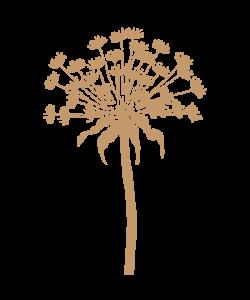 Sjabloon Bloemen 05 - Paardebloem 20cmx30cm